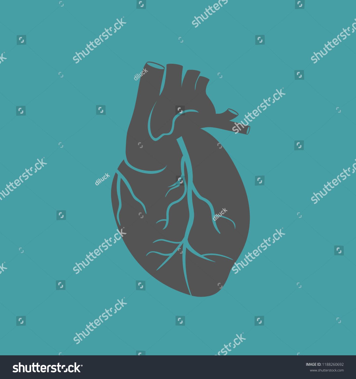 Icon Human Heart Anatomy Heart Man Stock Vector Royalty Free