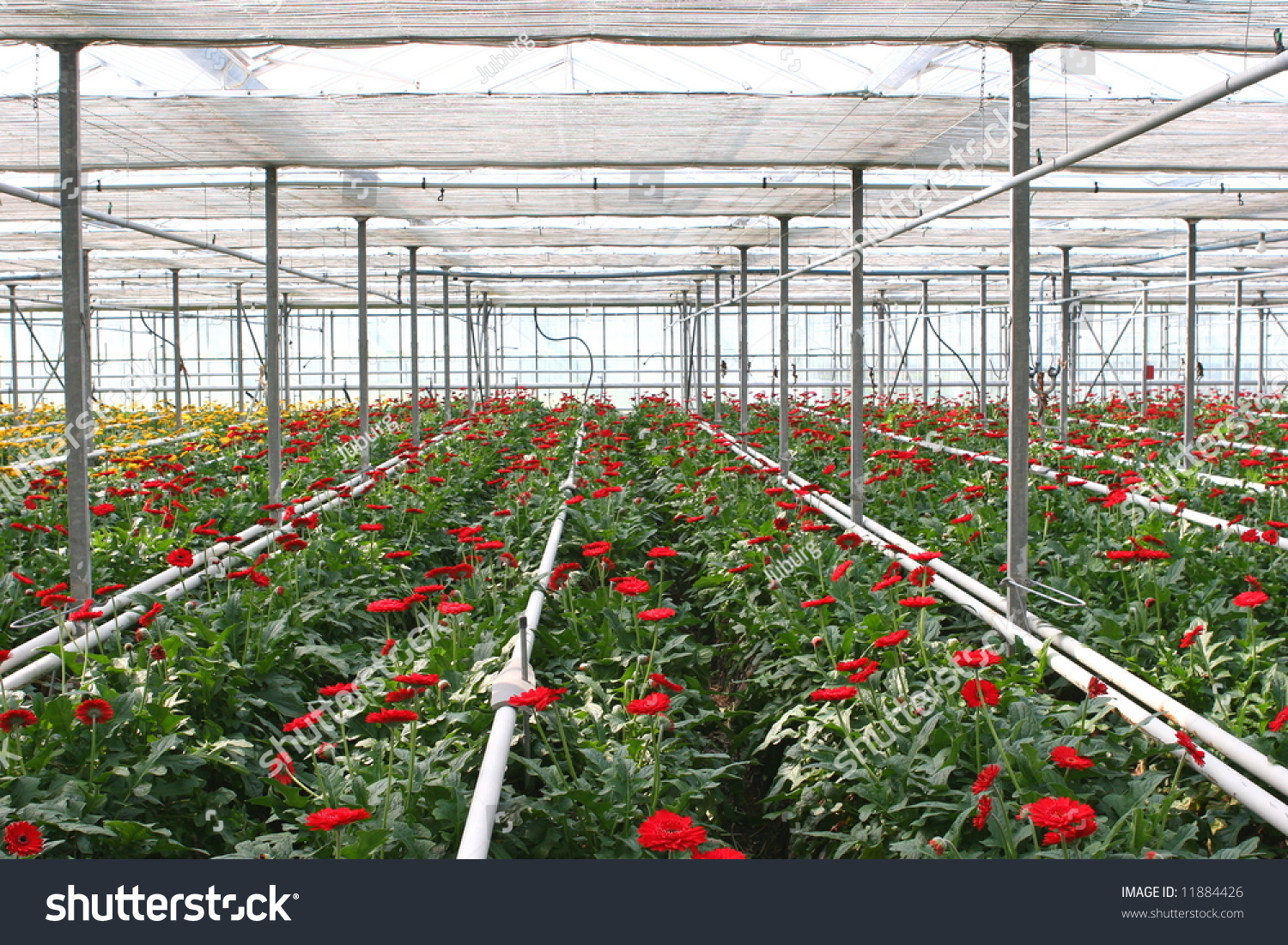 Hothouse With Red Flowers Stock Shutterstock