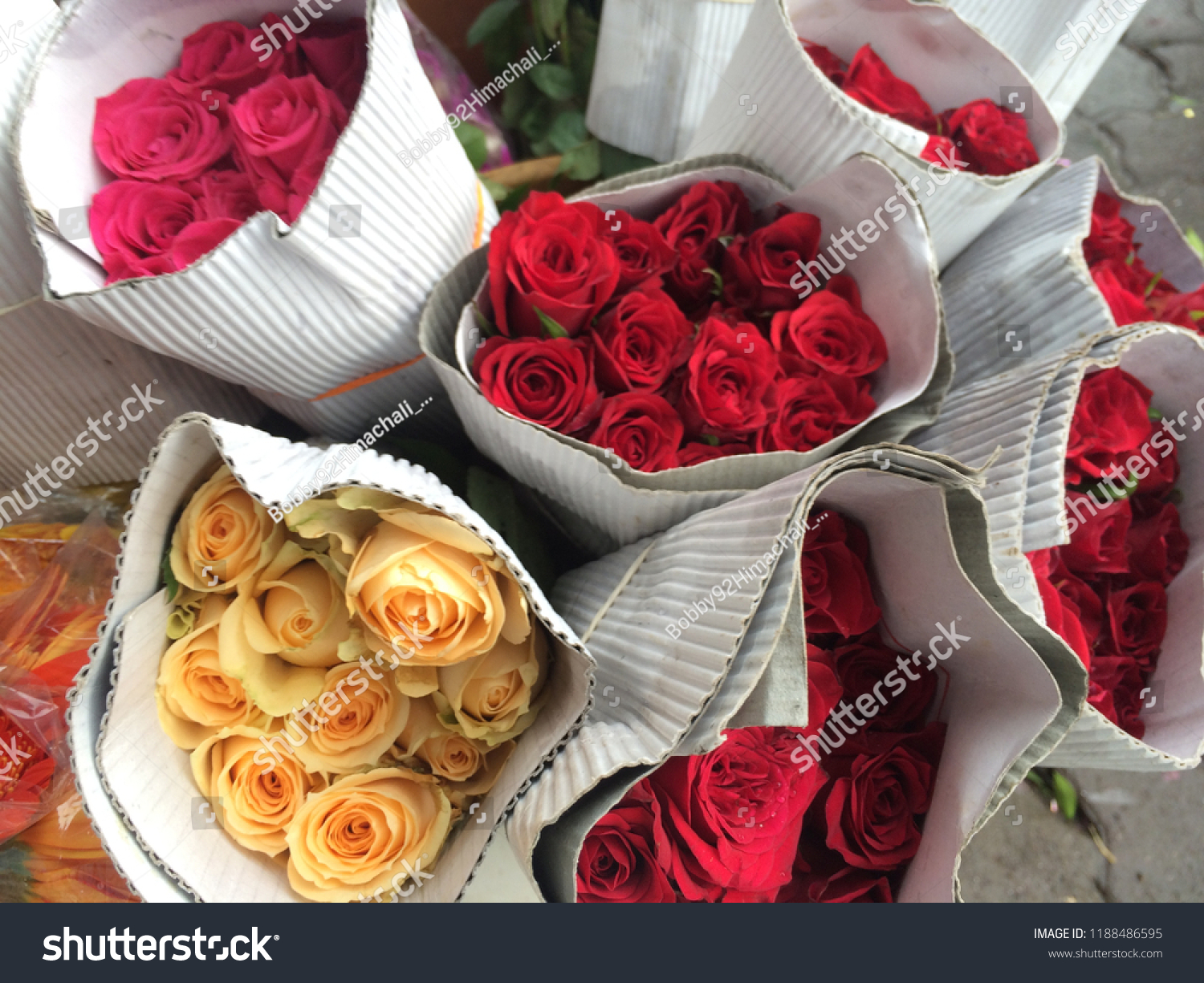 Beautiful Roses Hd Closeup Beautiful Rose Stock Photo Edit Now