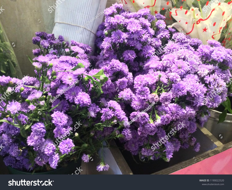 Most Beautiful Voilet Flower Hd Wallpaper Stock Photo Edit Now