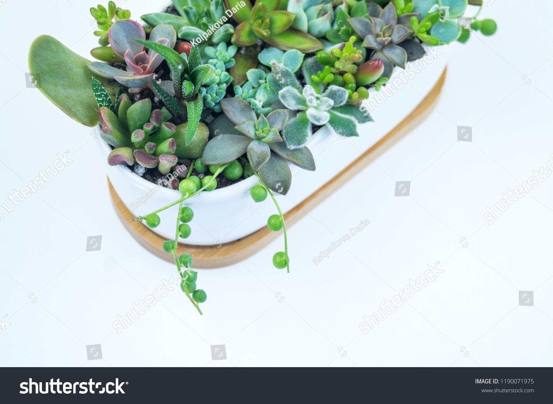 Composition Green Blue Succulents Ceramic Pots Stock Photo Edit Now 1190071975