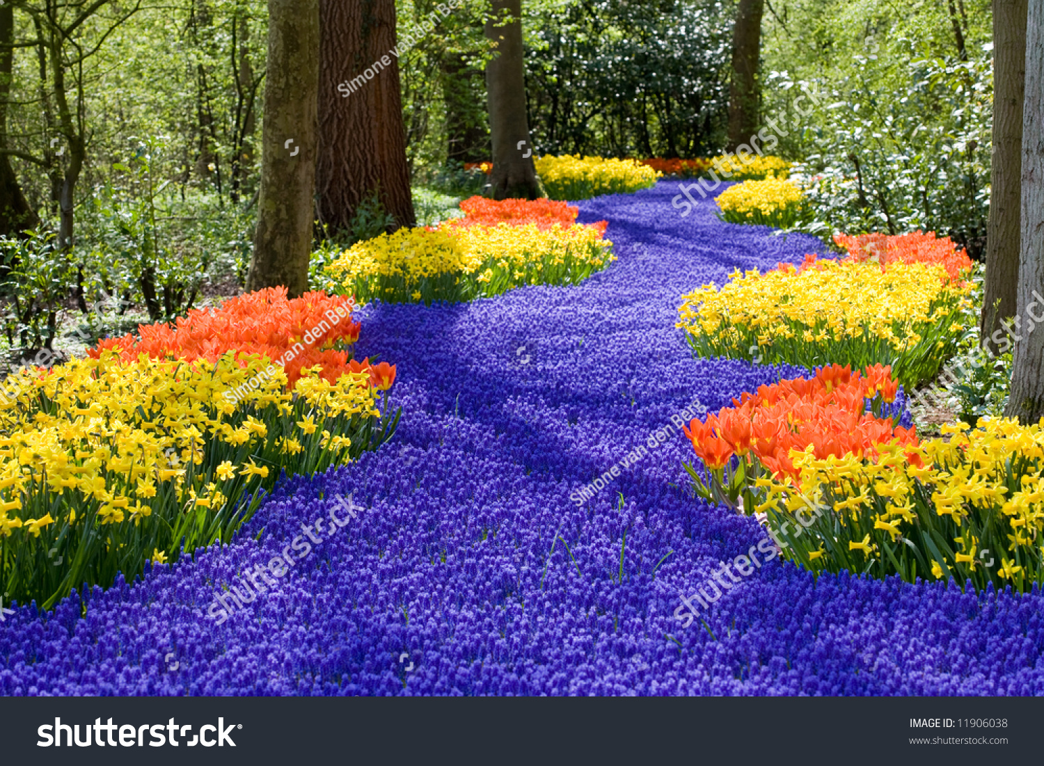Beautiful field spring flowers narcissus tulips stock photo edit beautiful field of spring flowers with narcissus tulips and muscari izmirmasajfo