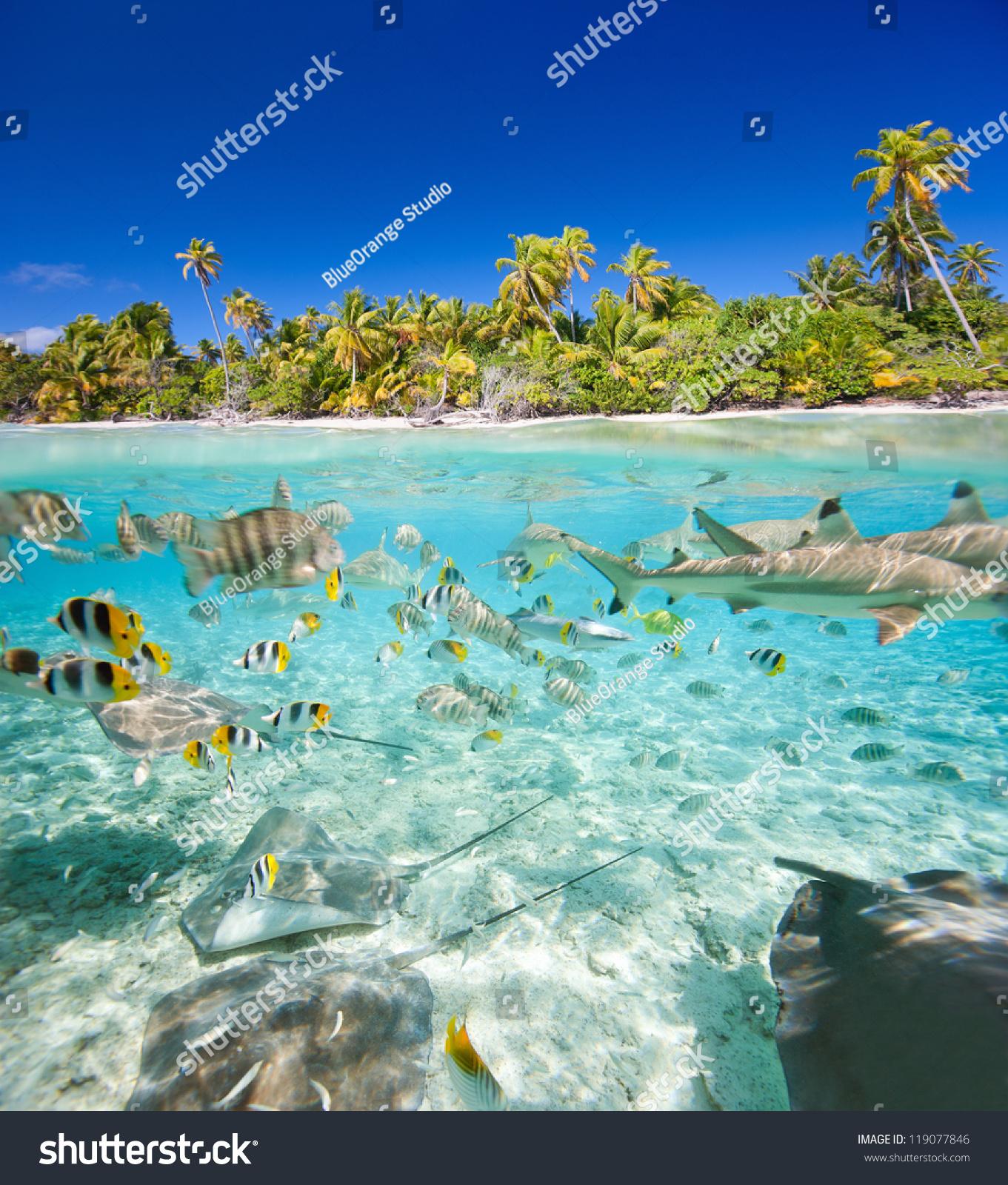 1366x768 beautiful tropical island - photo #35