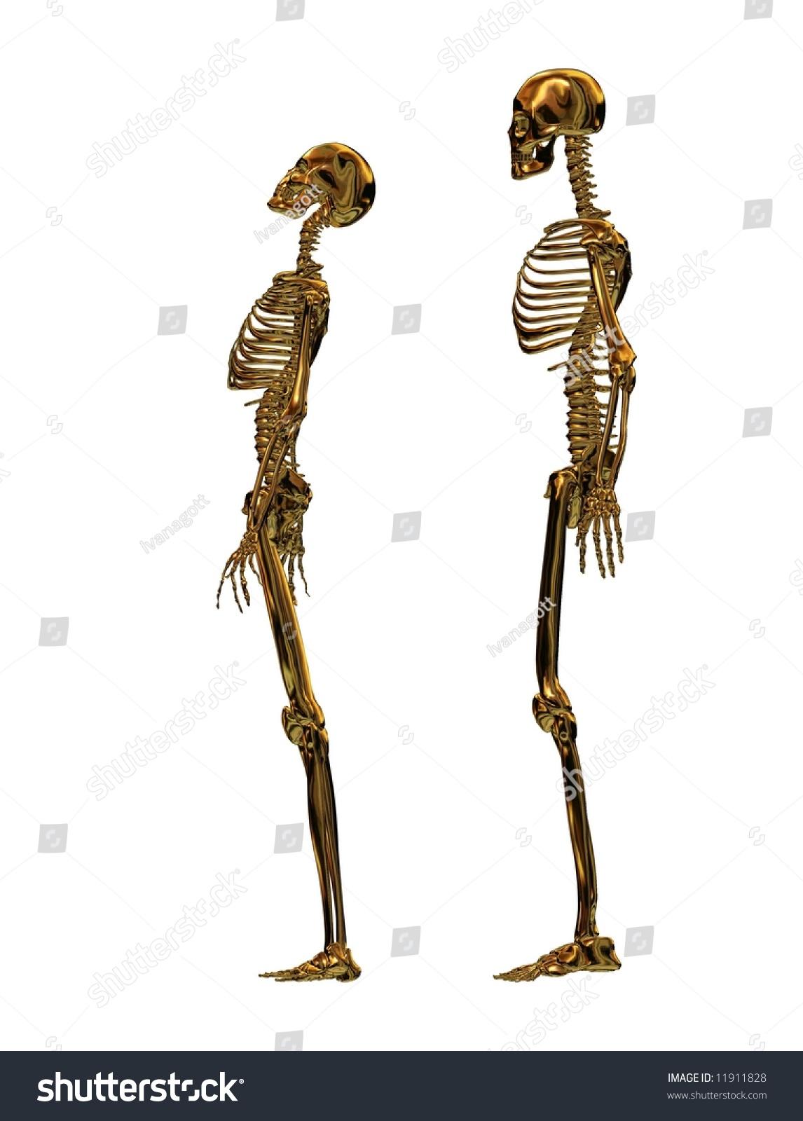 Female Male Golden Skeleton White Background Stock Illustration ...