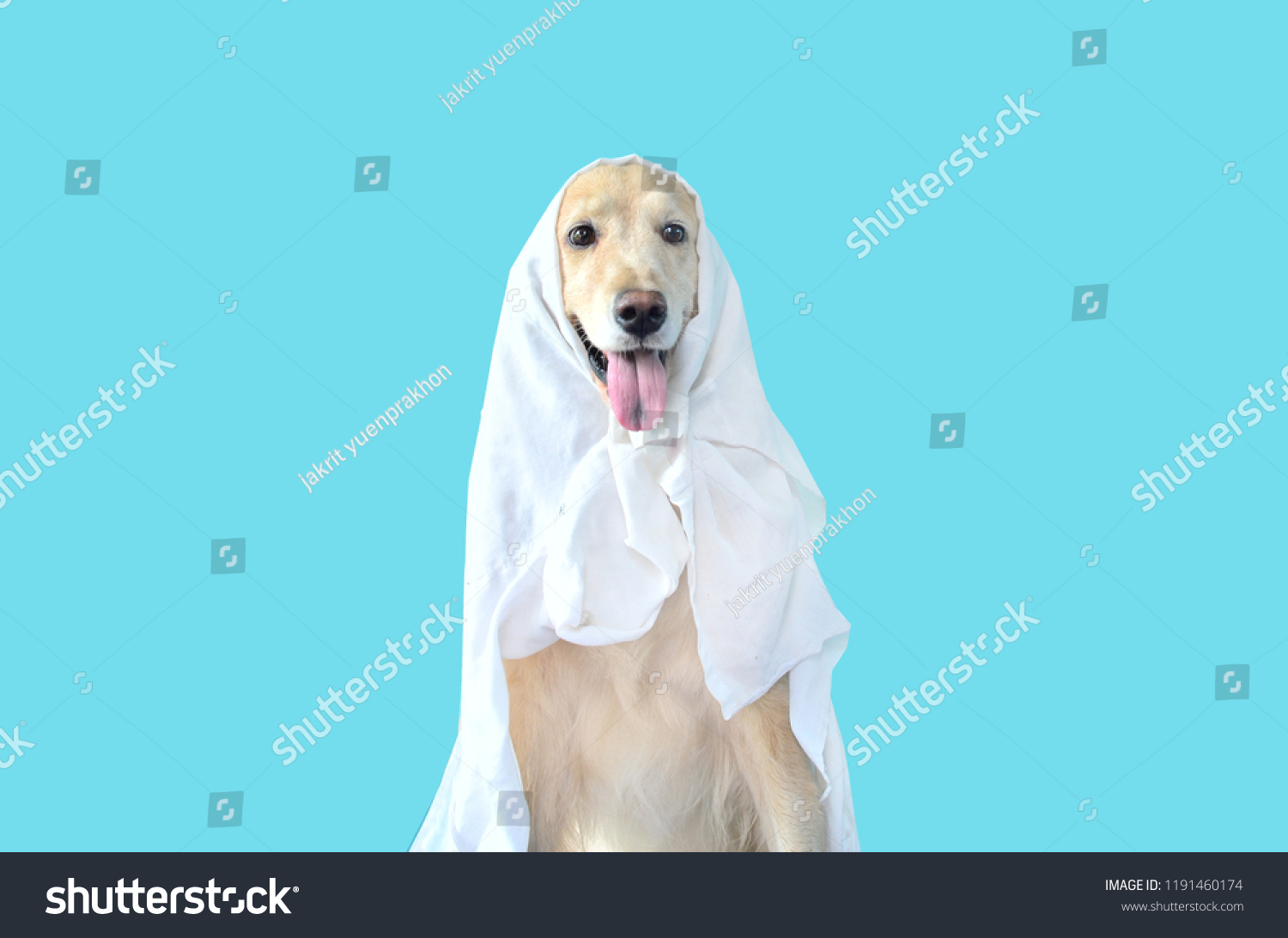 cute golden retriever dog halloween costume stock photo (edit now