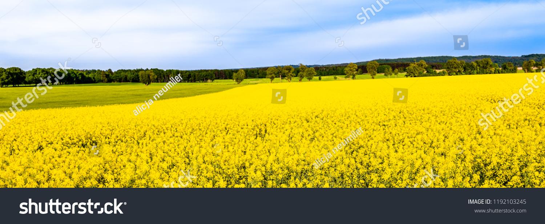 Landscape Farm Fields Rapeseed Yellow Flowers Stock Photo Edit Now
