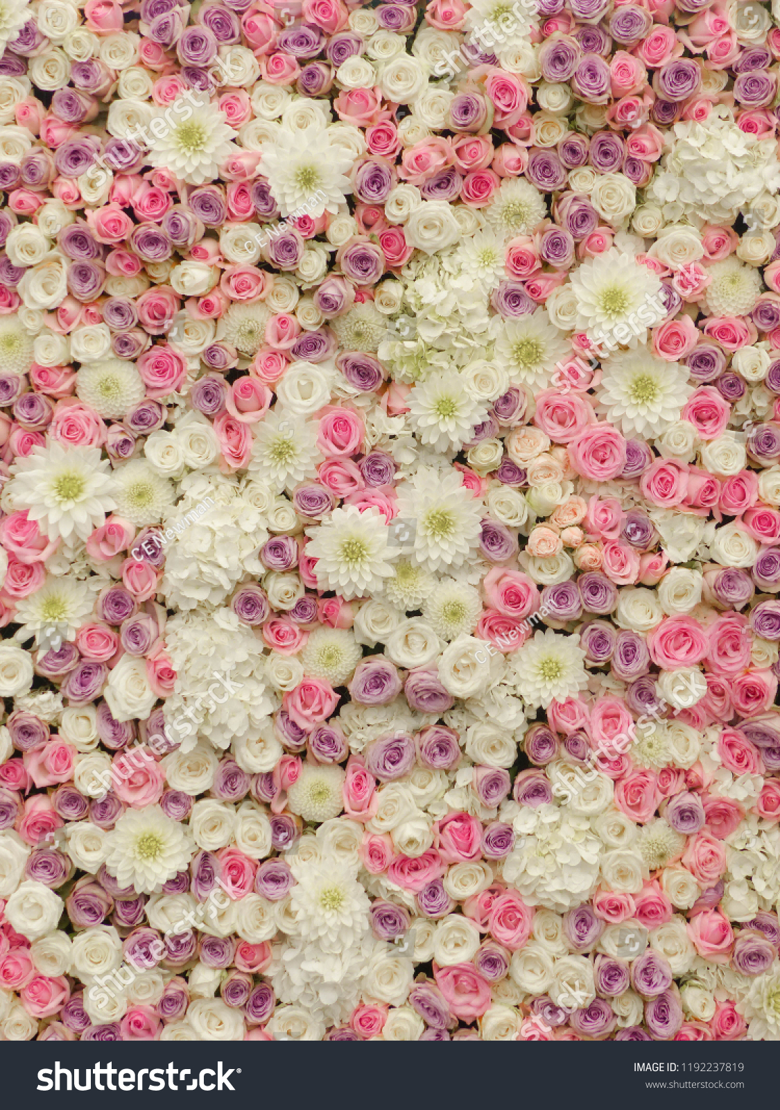 Soft Pastel Flower Wall Floral Background Stock Photo Edit Now