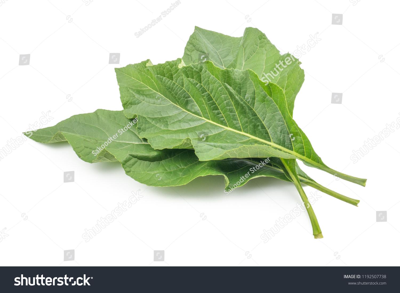 Nan Fui Chao Herbal Leaves Bitterleaf Stock Photo (Edit Now