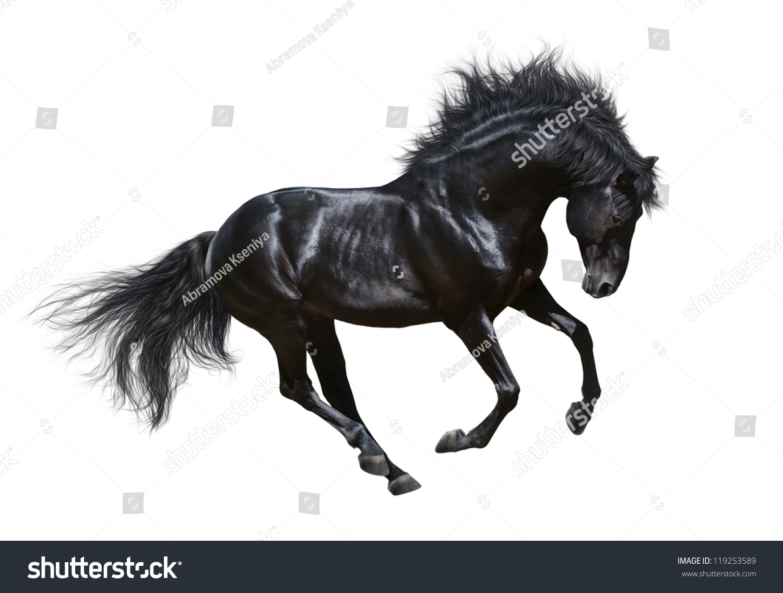 black a horse has - photo #26