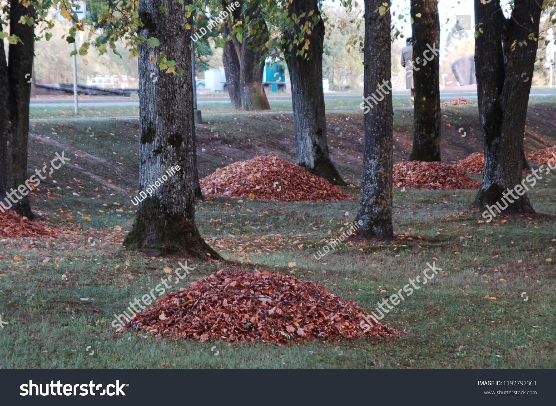 Autumn Landscape Design Yellowing Tree Leaves Stock Photo Edit