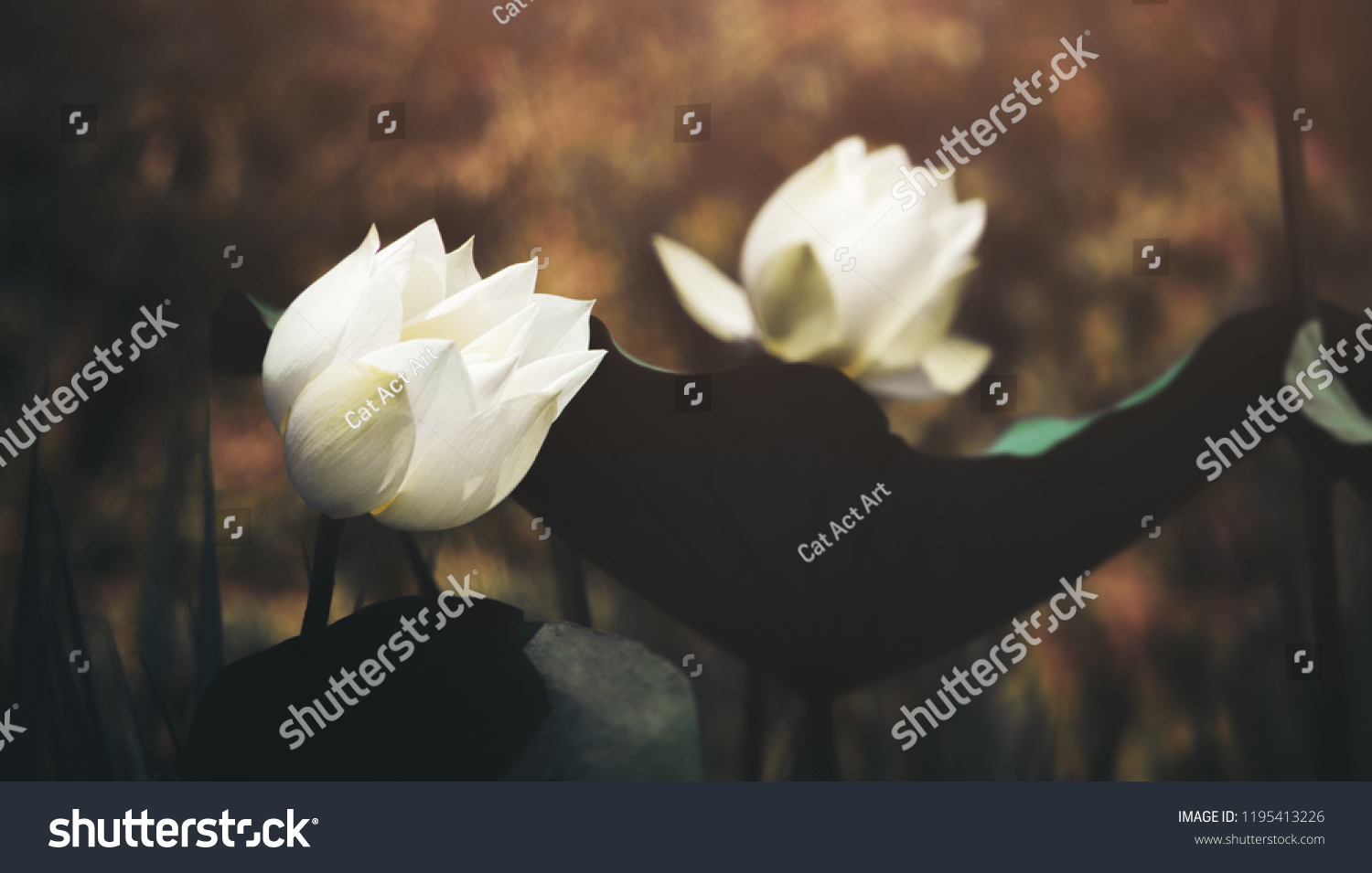 Lotus Flower Solitary Lonely Surrounding Point Stock Photo Edit Now