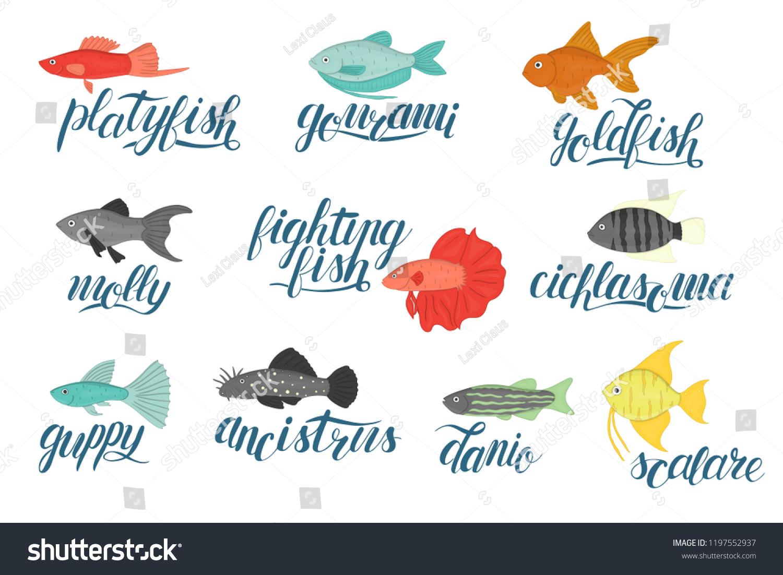 Vector Colored Set Aquarium Fish Lettering Stock Vector Royalty