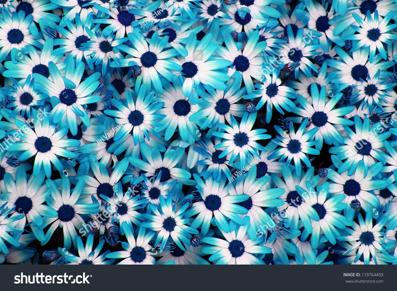 Very Nice Blue Flowers Background Stock Photo Edit Now 119764459