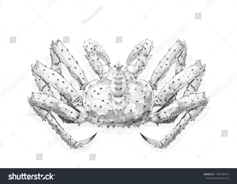 Crab pencil drawing