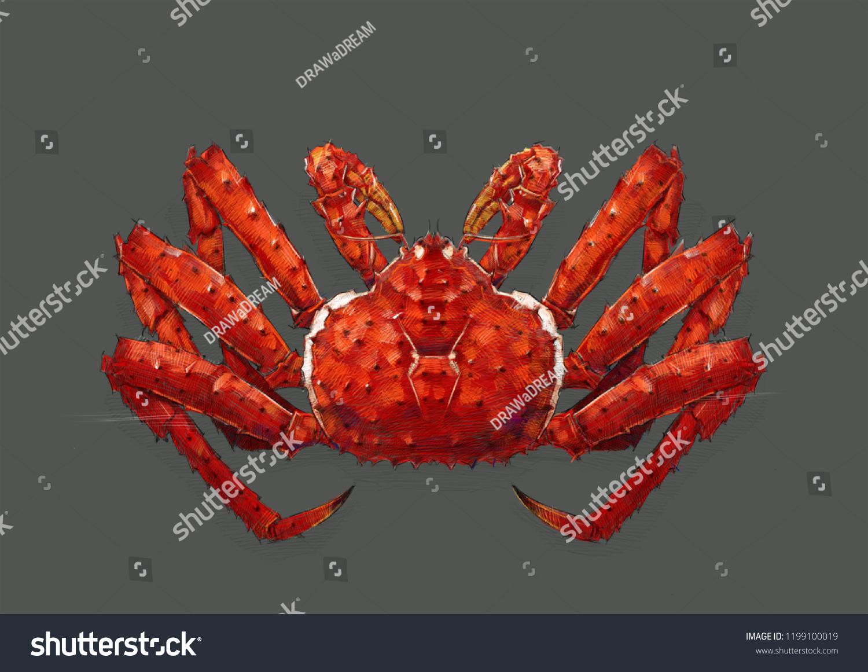 King crab sketch color pencil drawing stock illustration 1199100019