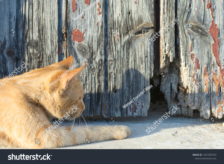 Cat awaits his next victim