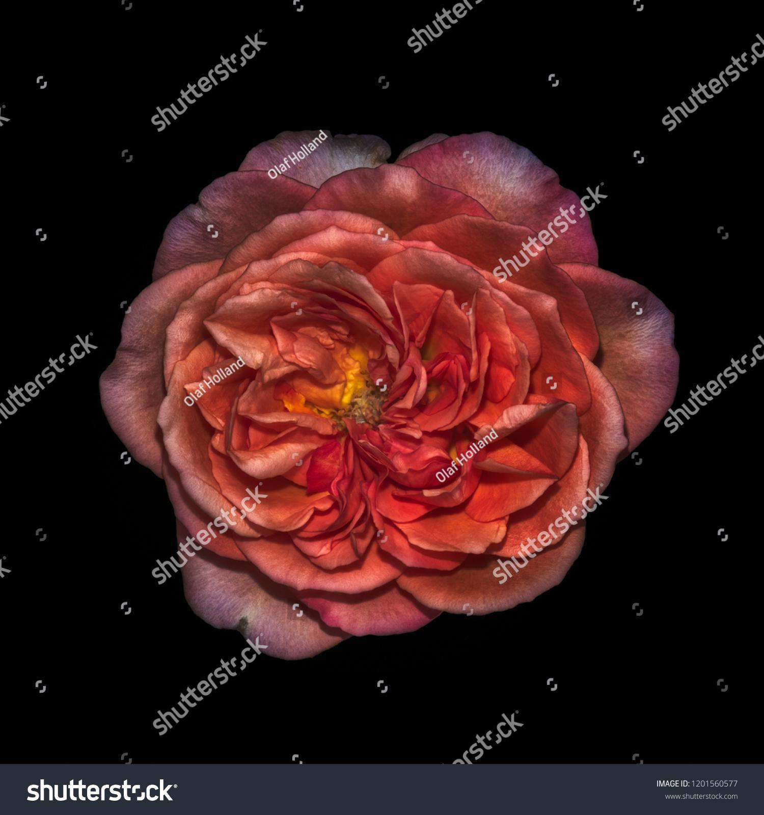 Dark Colorful Fine Art Still Life Stock Photo Edit Now 1201560577