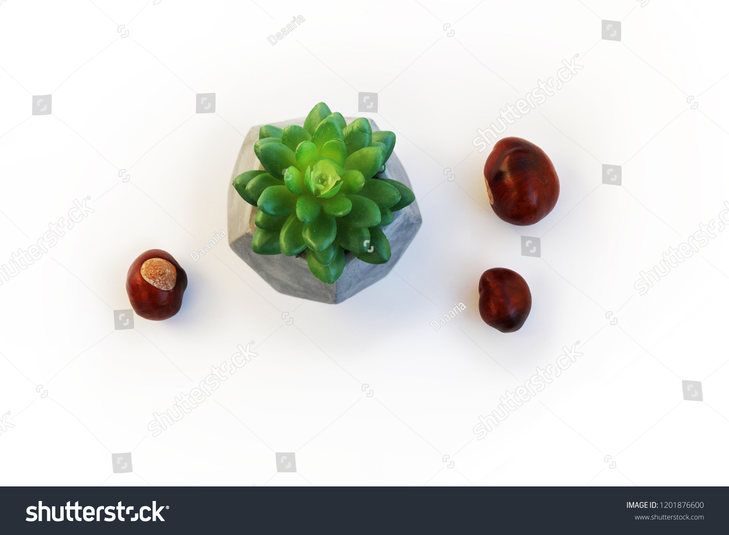 One Plastic Flower Crassula Plant Gray Stock Photo Edit Now 1201876600