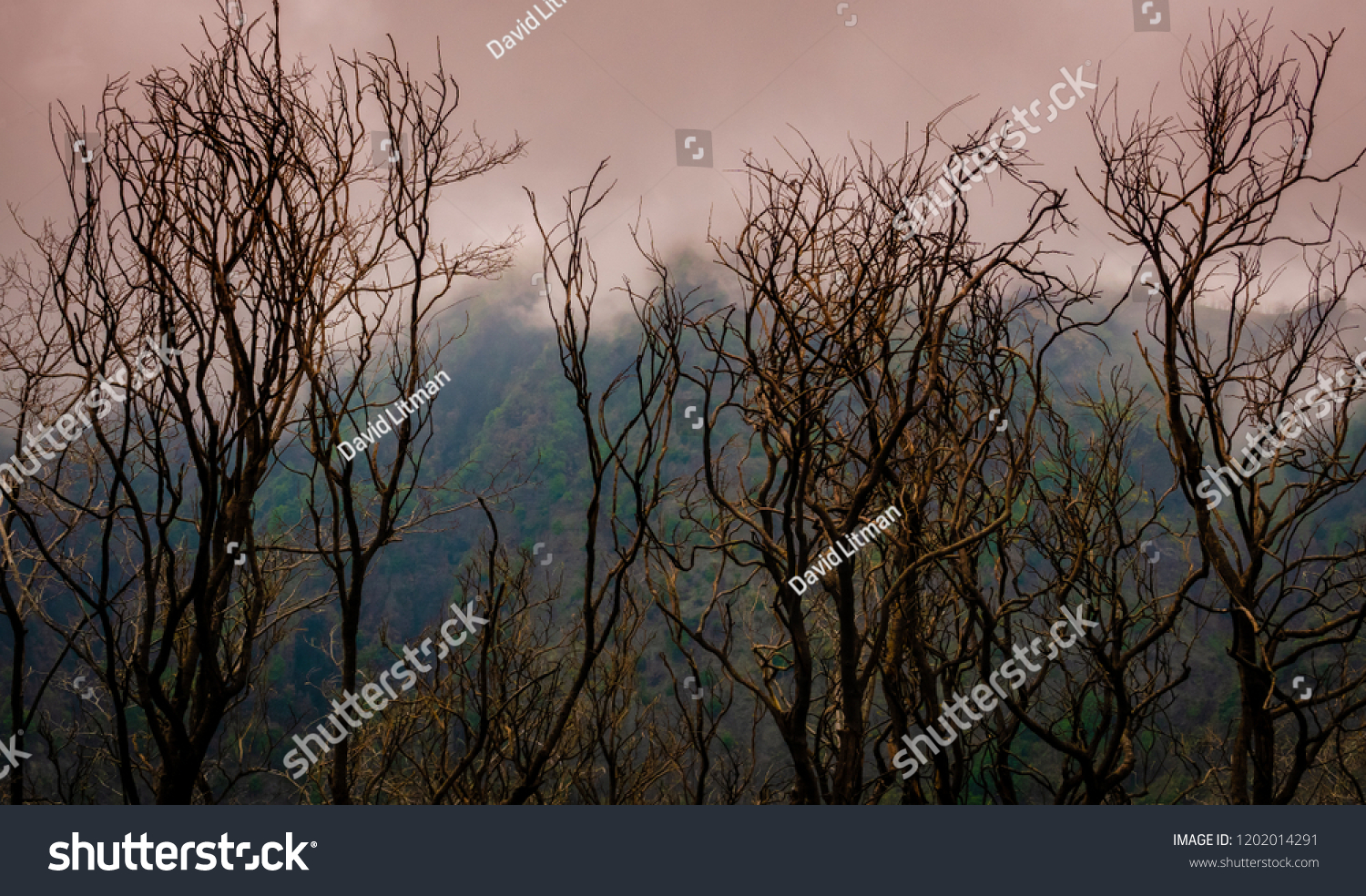 Clouds descend from above, as a storm moves in at dusk over a burned out forest at the base of Mount Vesuvius, in the Campania region of southern Italy.