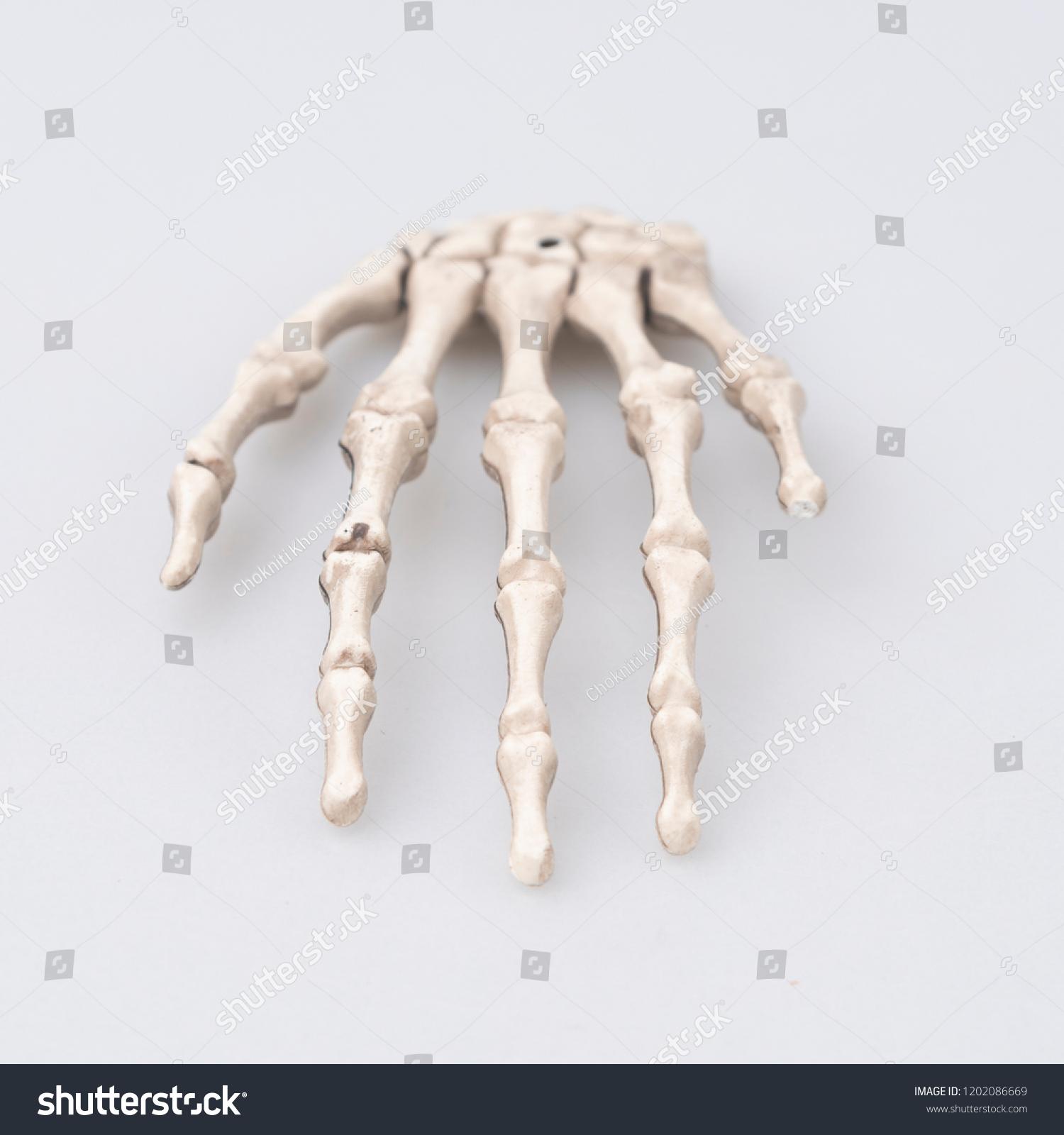 Human Finger Bone Halloween Concept Stock Photo Edit Now