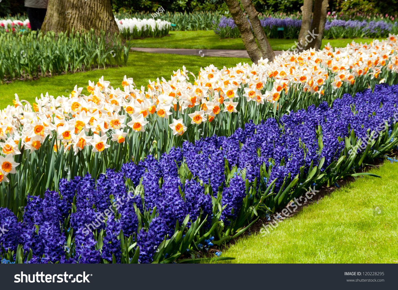 Beautiful Spring Flowers Keukenhof Park Netherlands Stock Photo