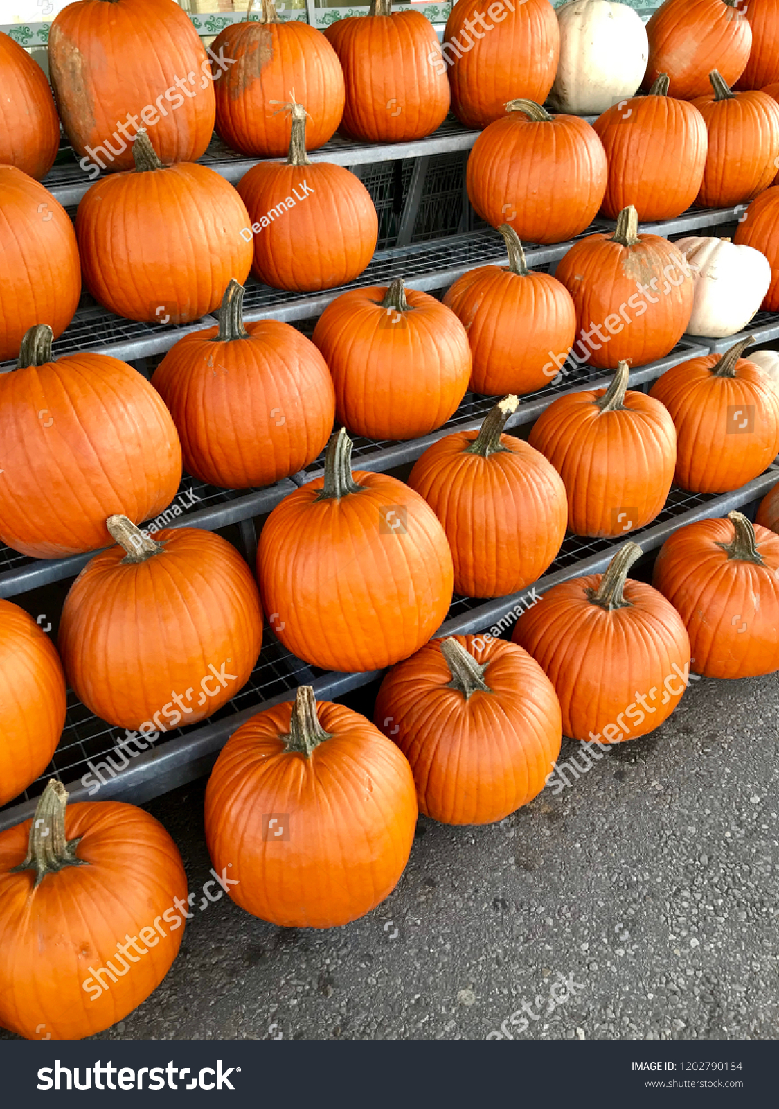 Great spots to go pumpkin picking close to bradford ourbwg. Ca.