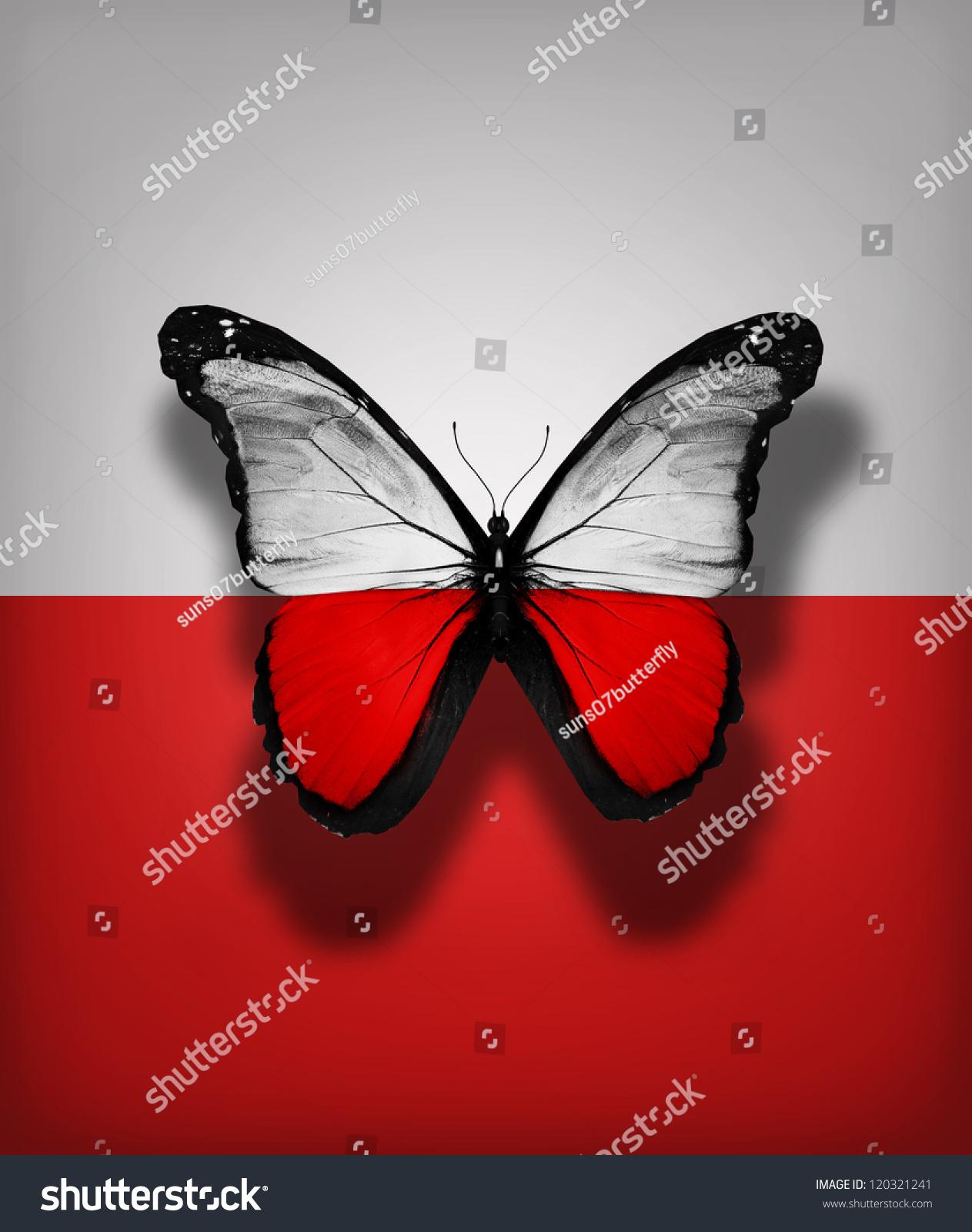 polish flag butterfly isolated on flag stock illustration