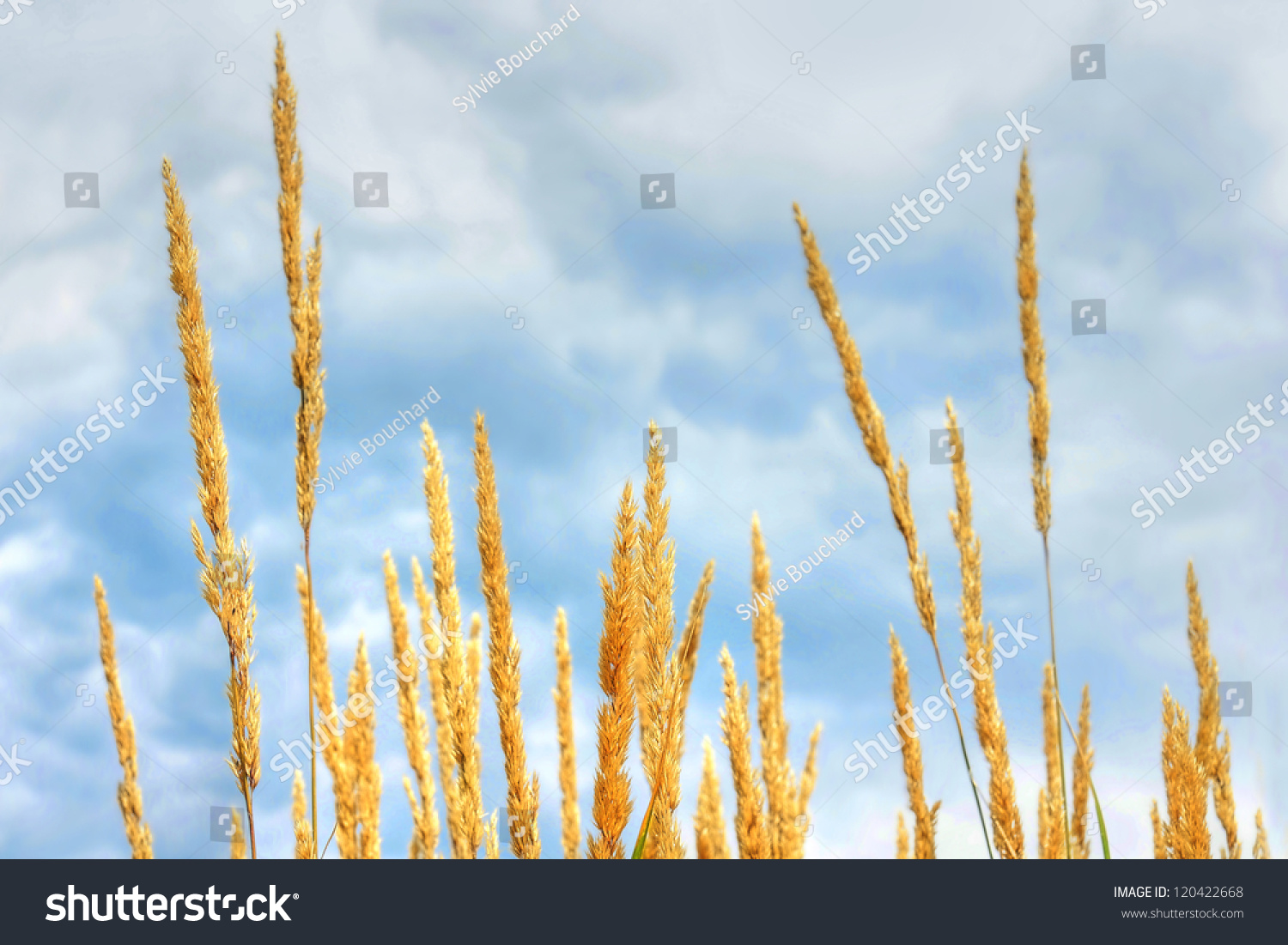 Dramatic hdr rendering cute herbaceous plant stock photo 100 legal dramatic hdr rendering of cute herbaceous plant and cloudy blue sky fun nature background thecheapjerseys Gallery