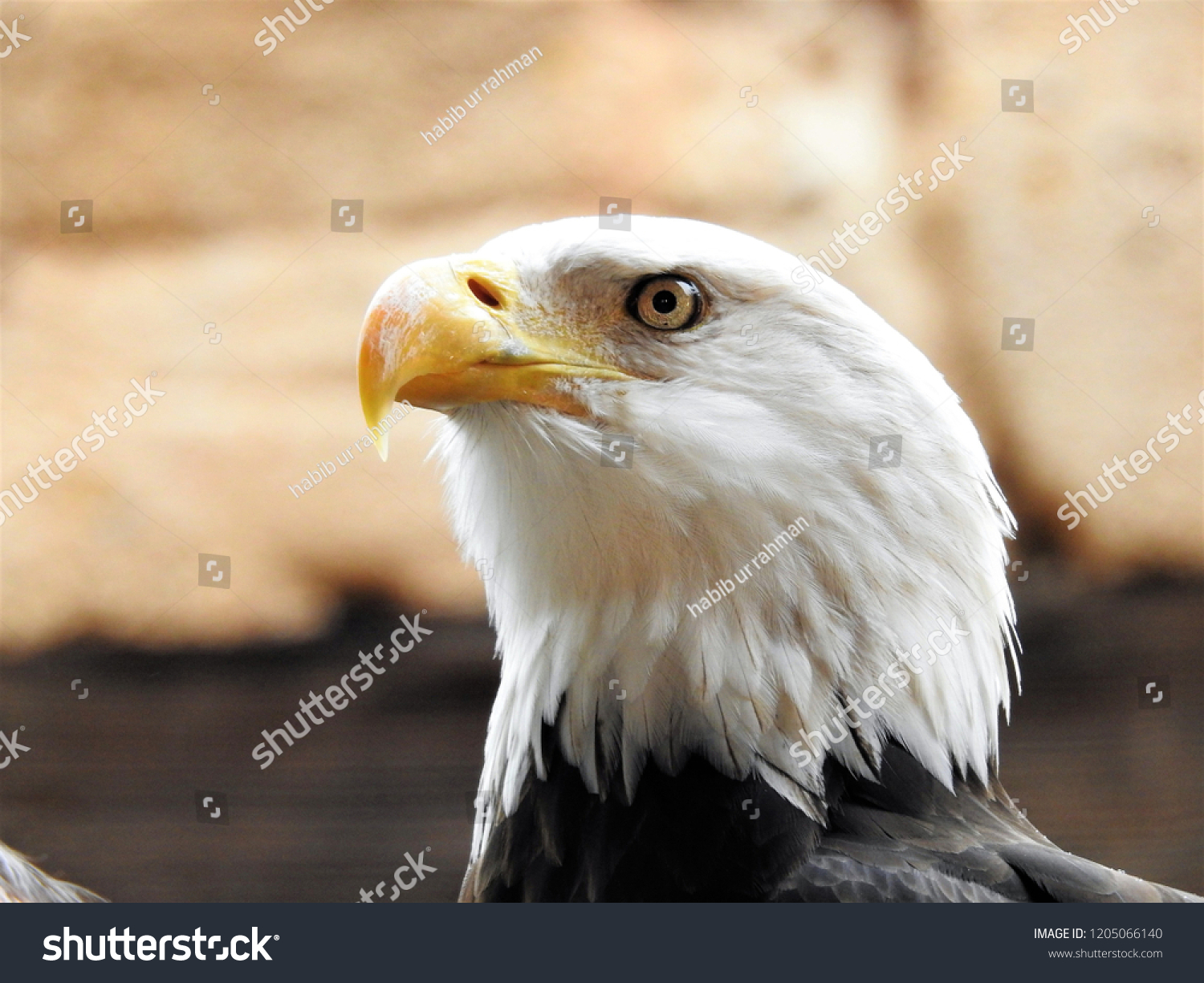 Adler Surname German Origin Meaning Eaglethe Stock Photo