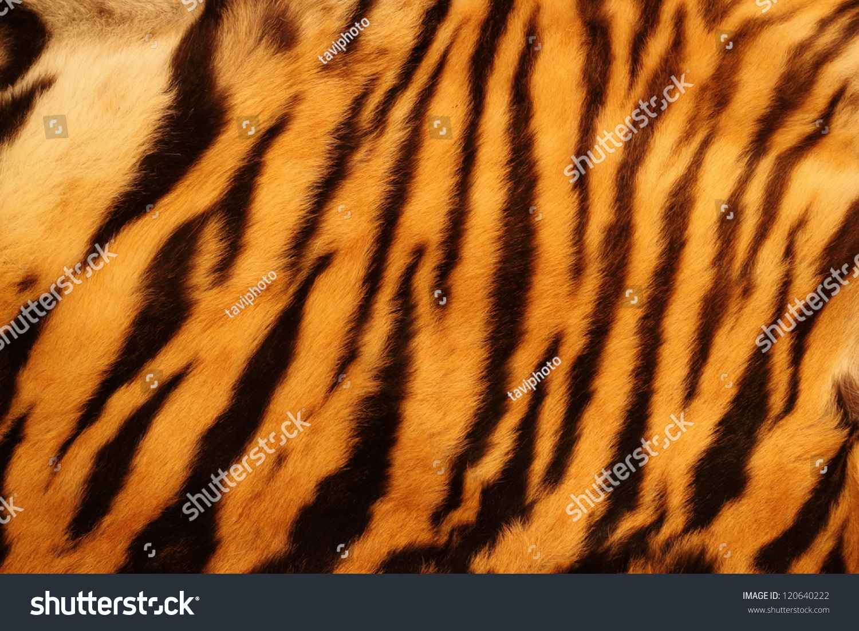 beautiful tiger fur colorful texture orange stock photo 120640222