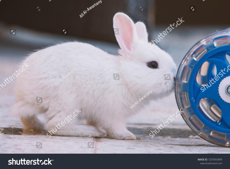 stock-photo-white-bunny-rabbit-push-the-