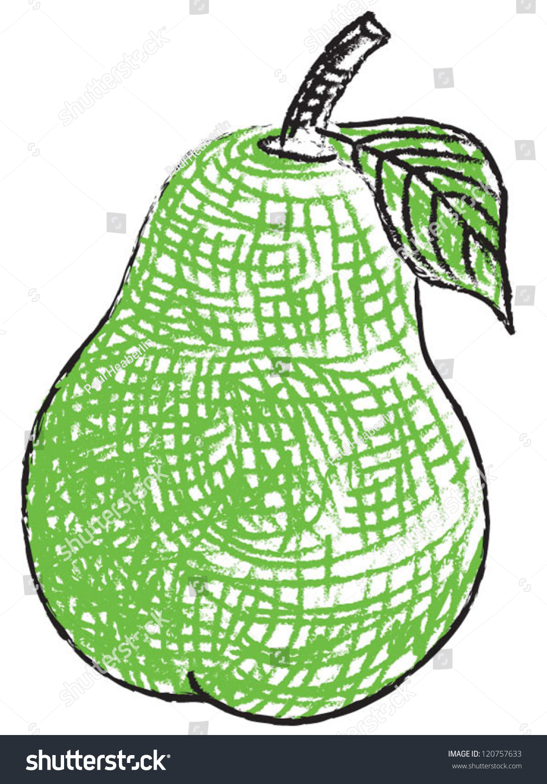 Contour Line Drawing Of Fruit : Drawn pear with cross hatching for texture and contour