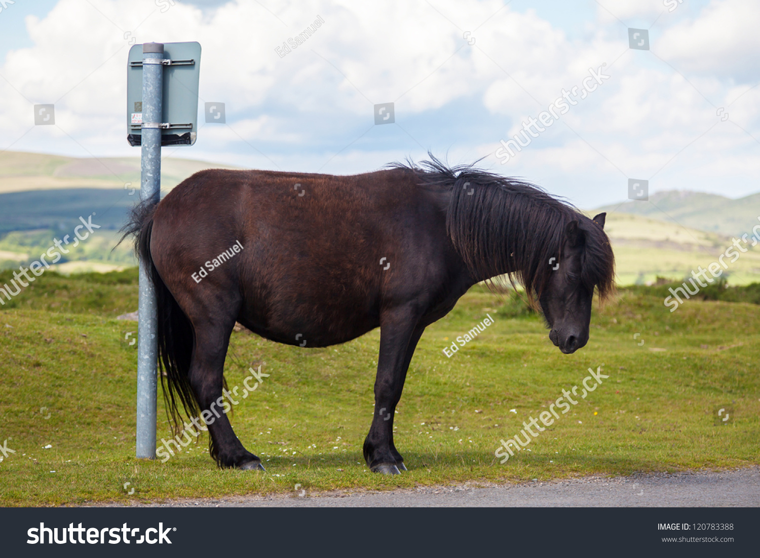 Horse Humor Horse Pony Scratching On Stock Photo Edit Now 120783388