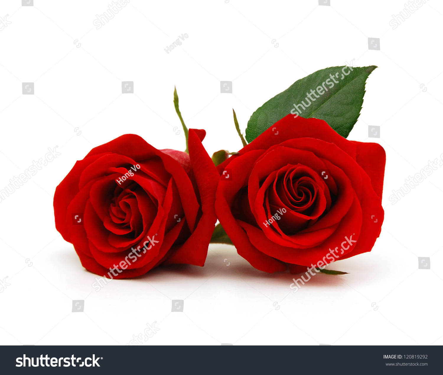 couple gift roses on valentine day stock photo 120819292