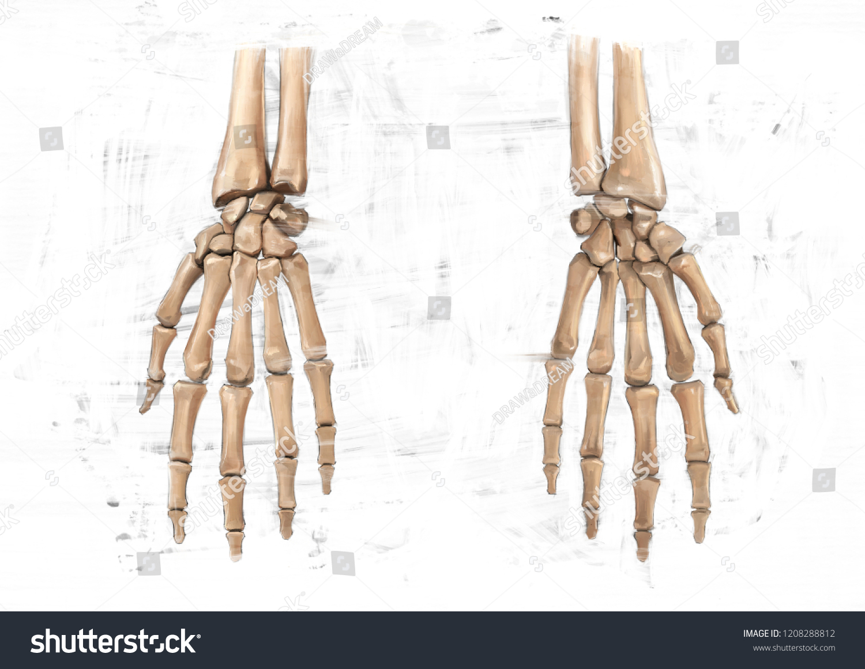 Human Hand Bones Oil Color Painting Stock Illustration