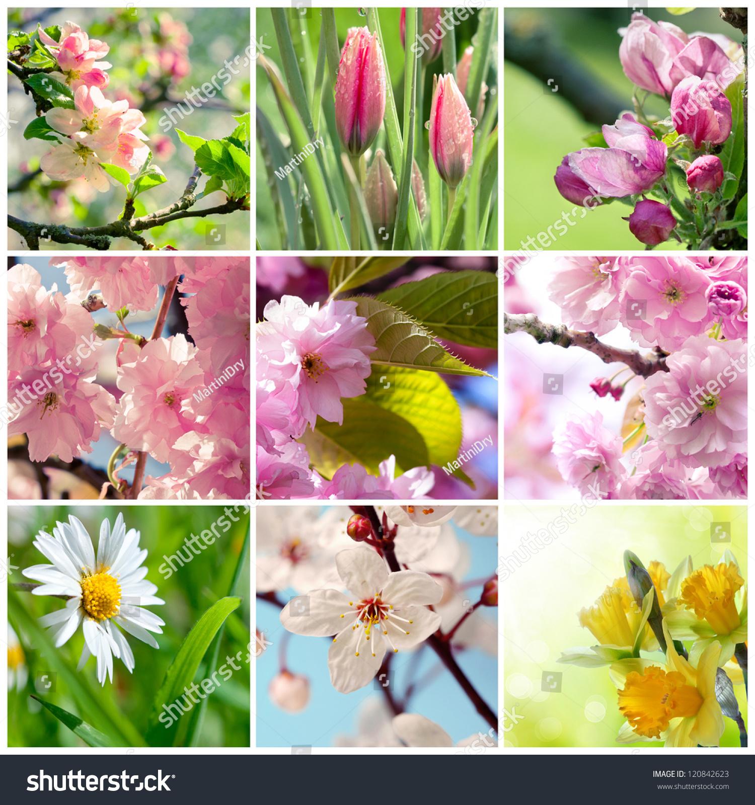 Beautiful Spring Flowers Collage Nine Photos Stock Photo Edit Now