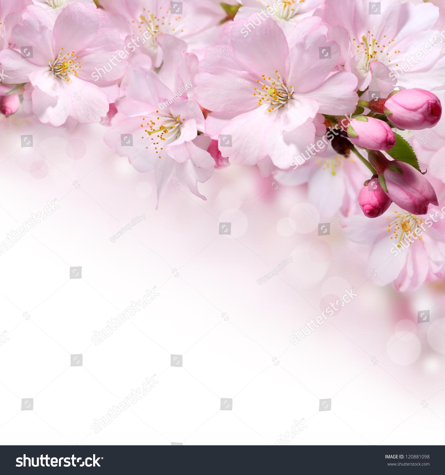 spring flower wallpaper pink - photo #35