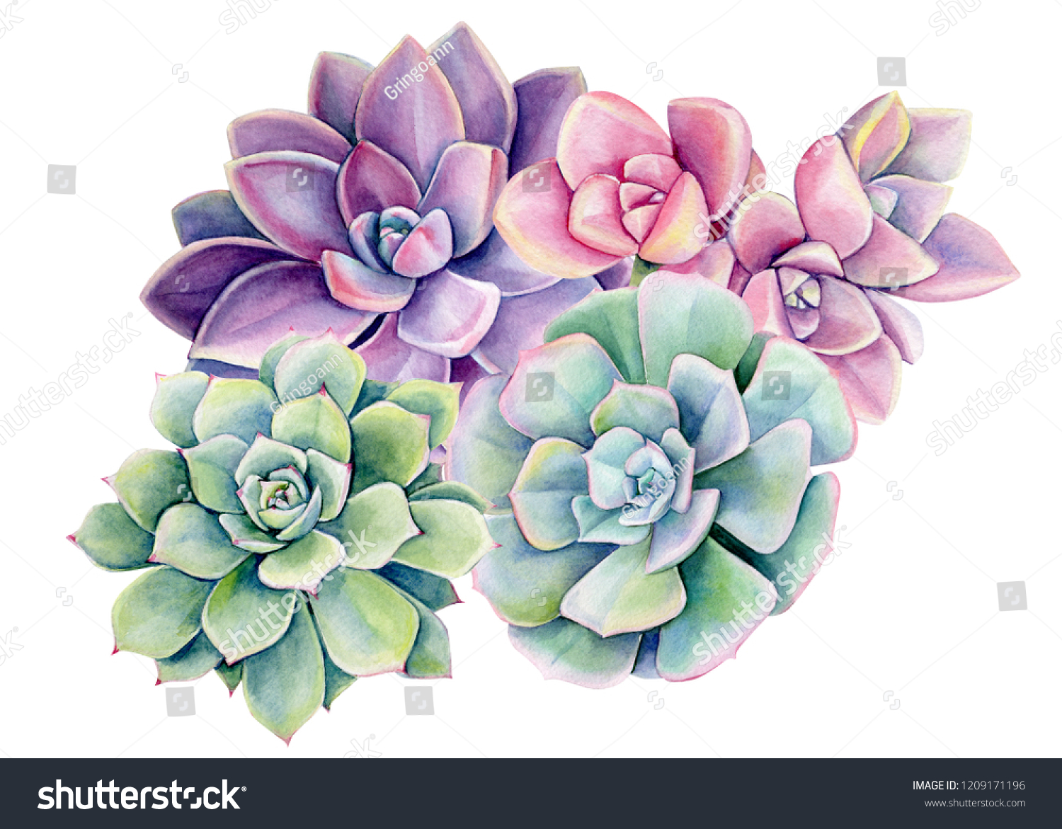 Bouquet Purple Succulent On Isolated White Stock Illustration 1209171196