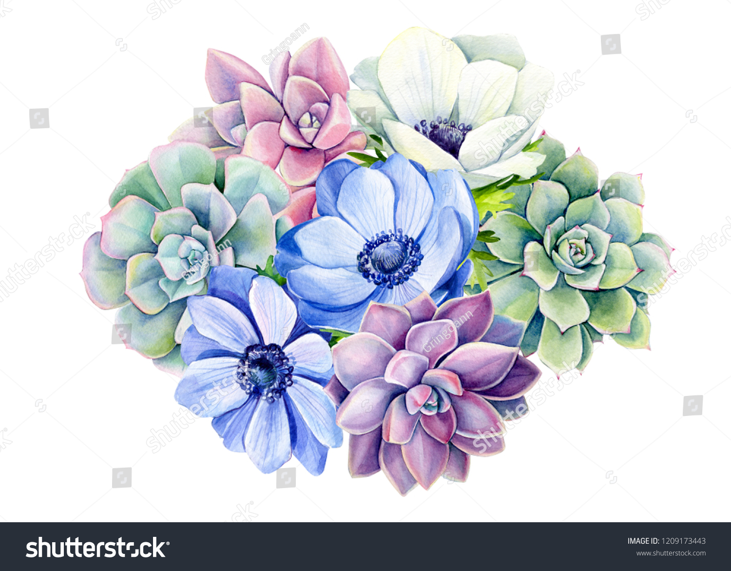 Bouquet Succulent Blue Anemones On Isolated Stock Illustration 1209173443