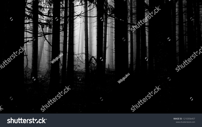 Halloween Spooky Wallpaper.Scary Dark Forest Wallpaper Halloween Spooky Stock Photo