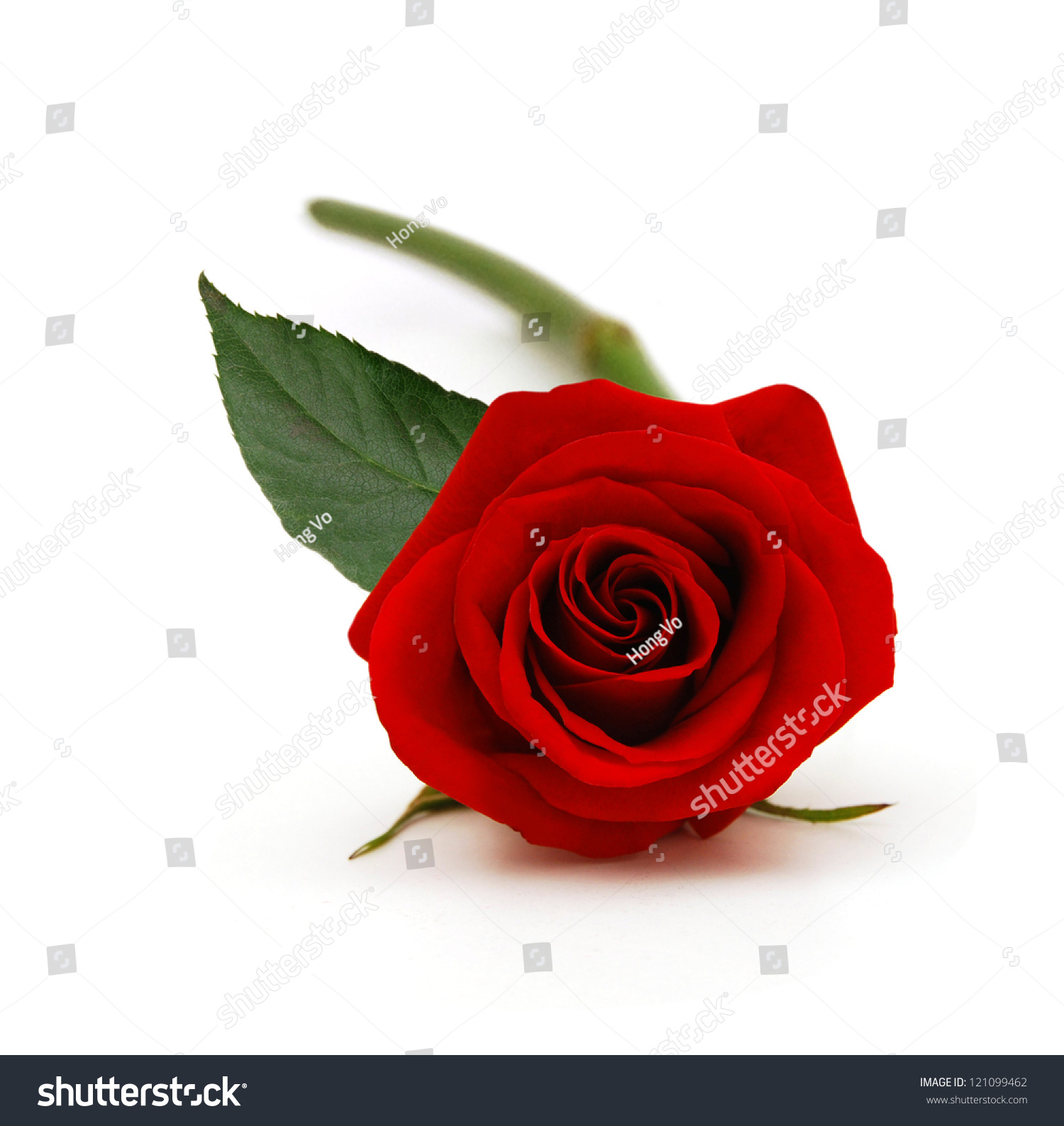 Bunch Of Rose Flowers On White Background Stock Photo ...