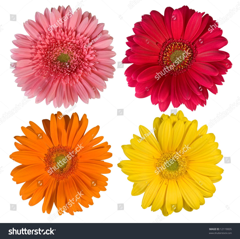 Four beautiful flowers more flowers my stock photo edit now four beautiful flowers more flowers in my portfolio izmirmasajfo