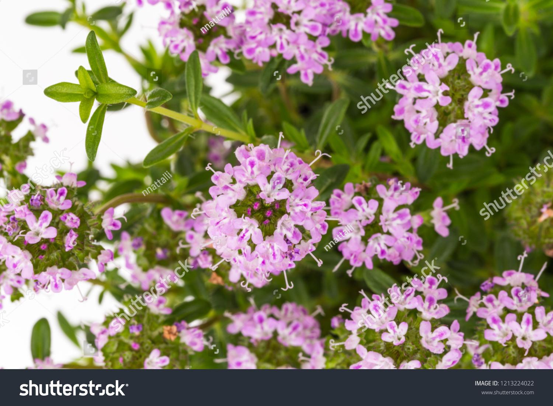 Watch Lila Flowers video