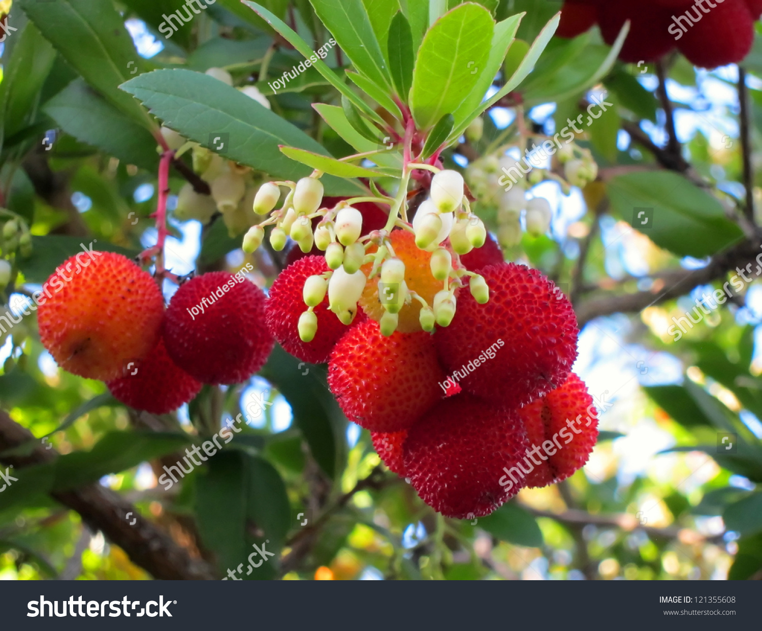 Here Red Fruit Small White Bell Stock Photo Edit Now 121355608