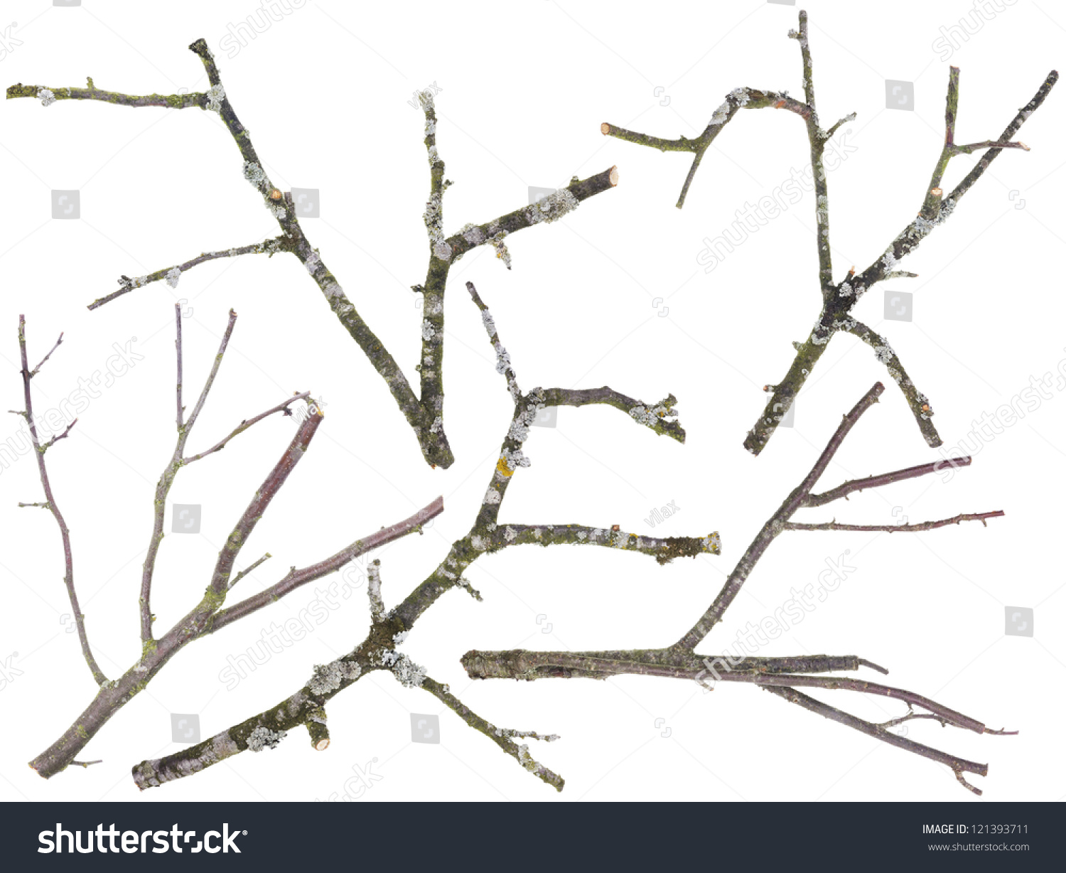 Branches And Twigs Are Cut Off From An Old Apple And