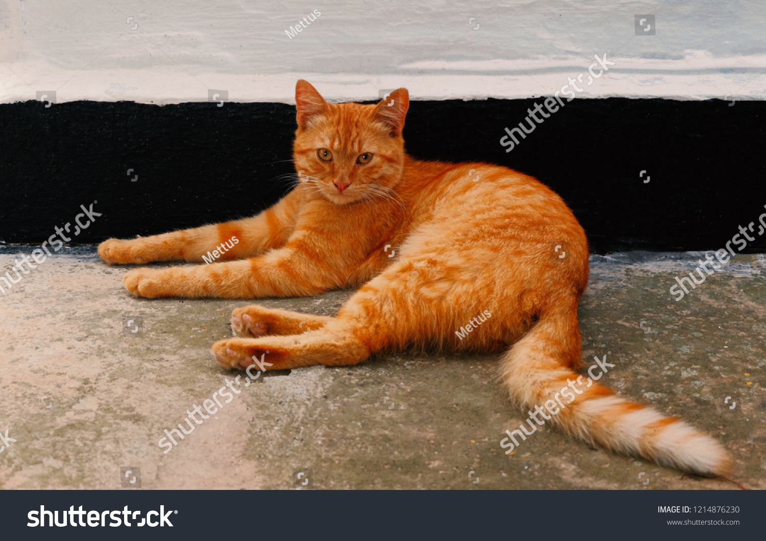 stock-photo-orange-cat-resting-near-the-