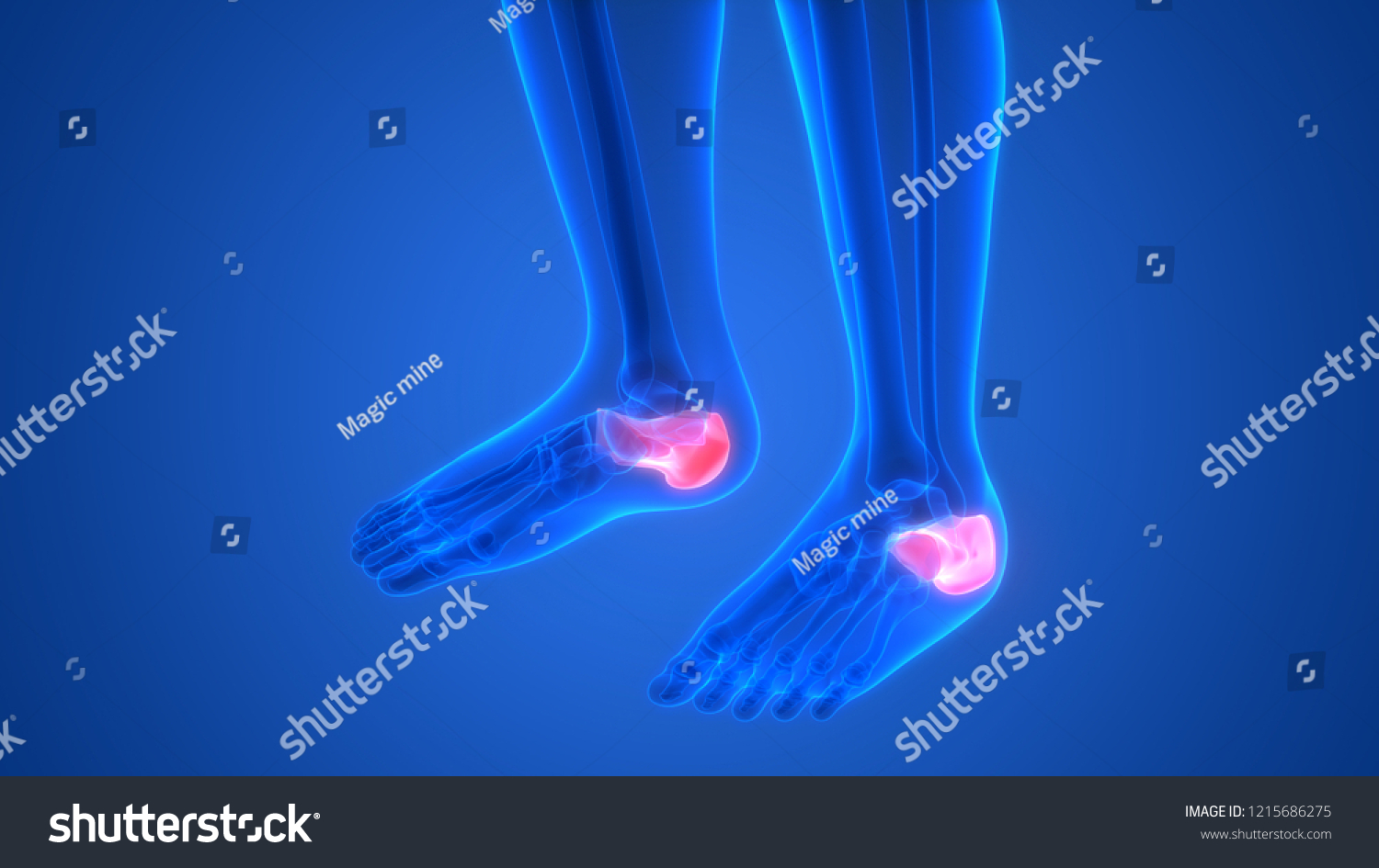 Royalty Free Stock Illustration Of Human Skeleton System Calcaneus