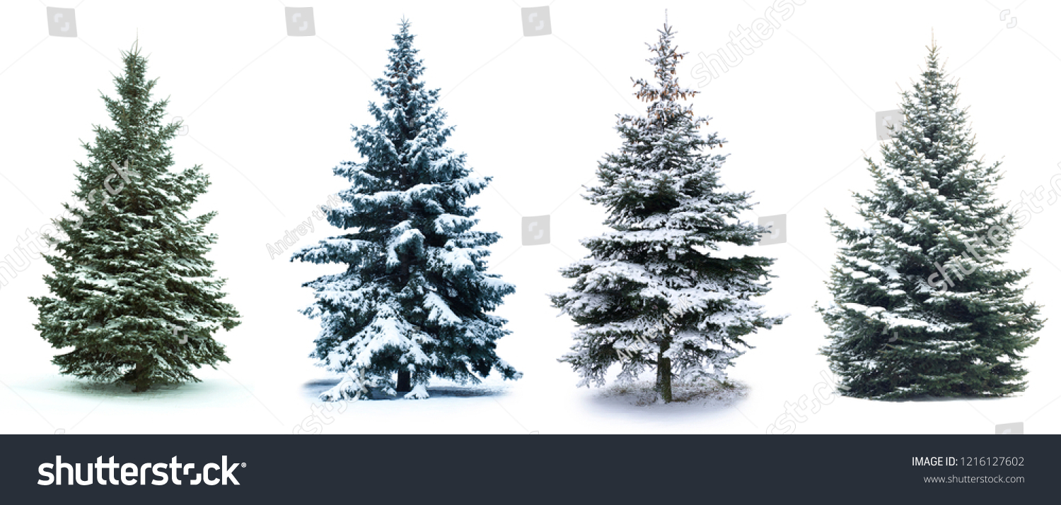 Christmas Tree collage. Christmas Tree in snow  isolated over white background #1216127602