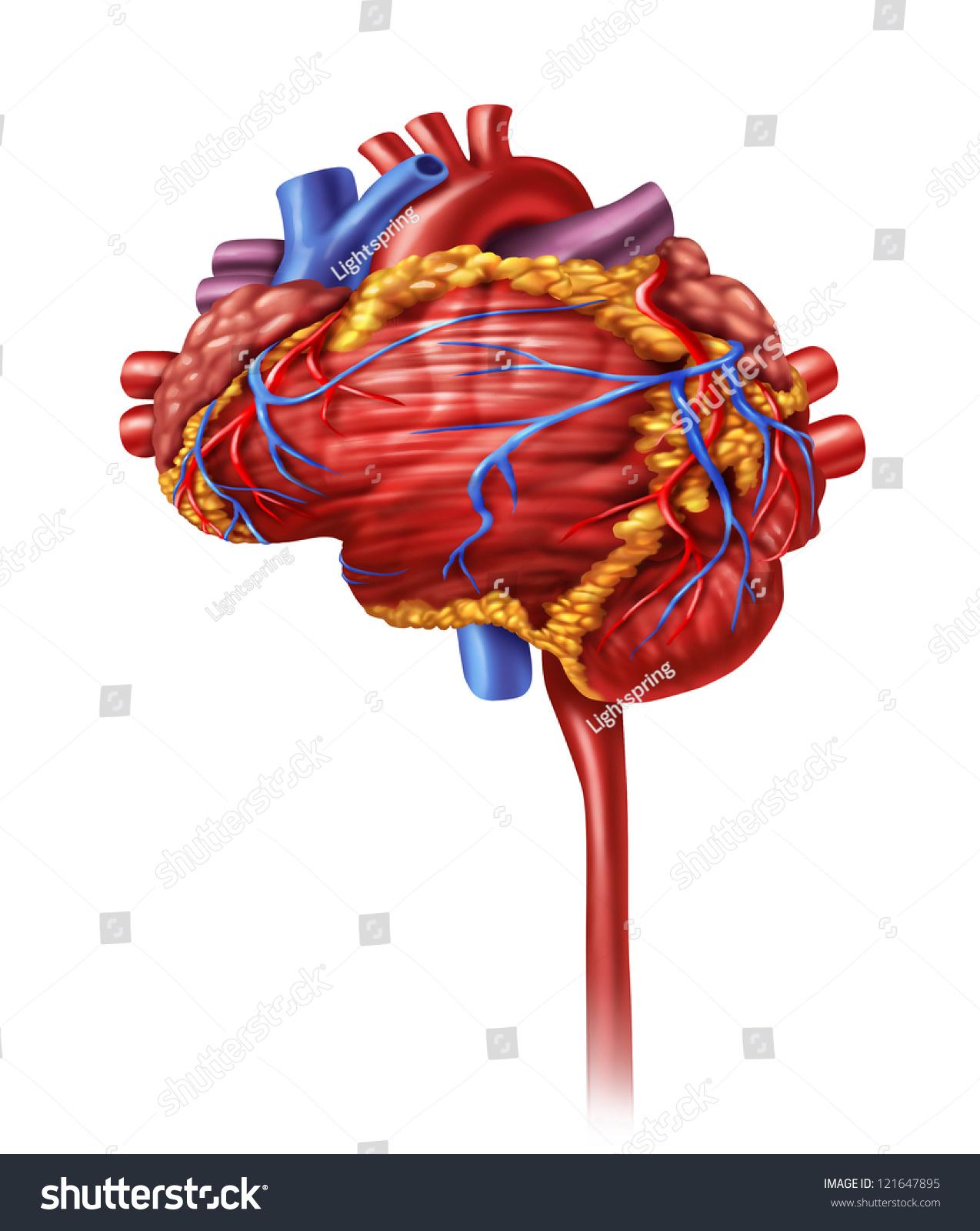 Human Heart Intelligence Research Cardiovascular Pumping Stock ...