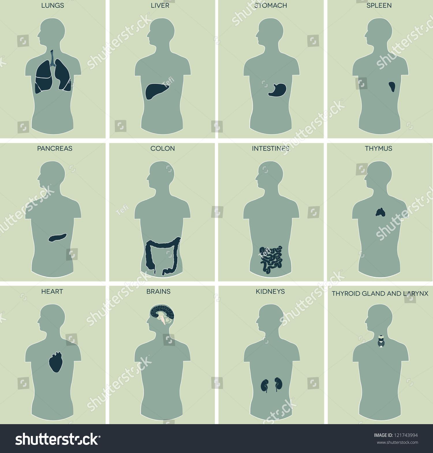 Human Anatomy Detailed Diagram Various Human Stock Illustration